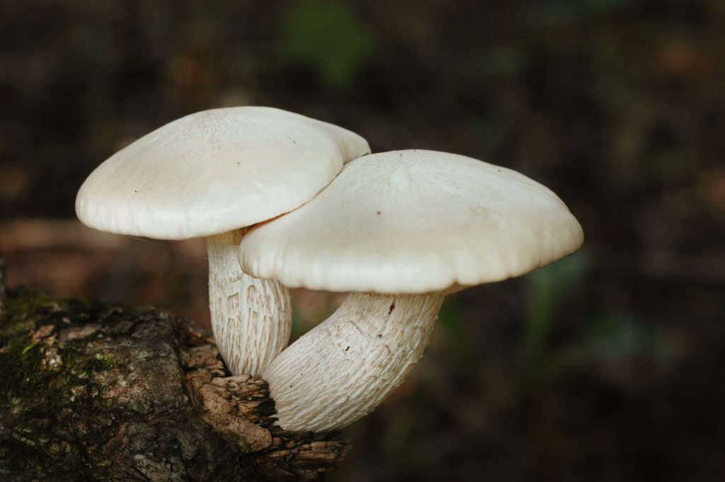 """rich results on google's SERP when searching """"mushrooms"""""""