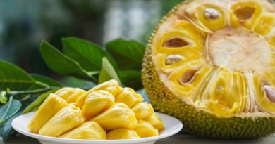 """rich results on google's SERP when searching for """"Jack fruit nutrients"""""""