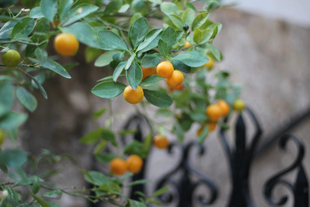 "rich results on google's SERP when searching ""Little mandarin fruit"""